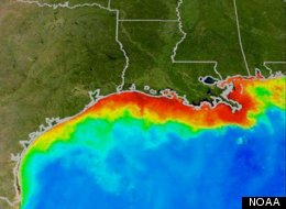 """Low levels of oxygen dissolved in the water is often referred to as a """"dead zone"""" (in red above) because most marine life either dies or leaves. Habitats that would normally be teeming with life become, essentially, biological deserts."""