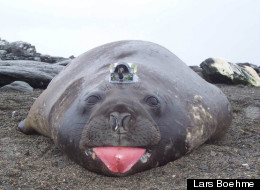 Data recorded by elephant seals helped scientists conclude that an enormous Antarctic ice shelf is melting slower than previously thought.