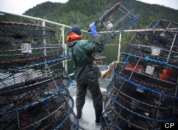 Fatigue, unsafe work practices and a lack of training continue to put fishermen at risk despite hundreds of safety investigations and subsequent recommendations, the Transportation Safety Board said Thursday in a report. (CP/John Lehmann )