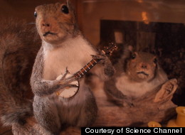 San Francisco-based curio shop owner Audra Kunkle enjoys doing taxidermies of animals in human settings.