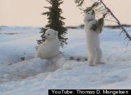 YouTube: Thomas D. Mangelsen