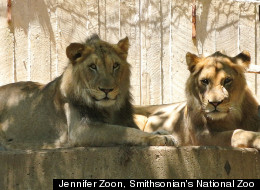 Jennifer Zoon, Smithsonian's National Zoo