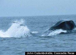 John Calambokidis, Cascadia Rese