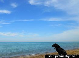 Flickr: picturesbydiann
