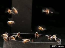 Luke Chen, 27, discovered a hive of 50,000 bees living inside the walls of his Los Angeles home -- so he called a professional to relocate the hive.