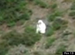 A man spotted dressed in a goat suit among a herd of wild goats in the mountains of northern Utah has wildlife officials worried he could be in danger as hunting season approaches.