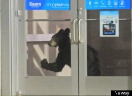 A year-old black bear cub made her way into a Pennsylvania mall this Saturday evening.