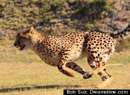 Bob Suir, Dreamstime.com