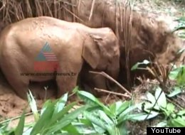 Mother and Calf Elephant trapped in the abandoned pit were rescued by forest officials.