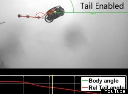 Robots could have tails in the future after a study found they could right themselves in mid-air
