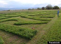 Close up of message carved into field of alfalfa in Grand Junction, Colo. with the message: