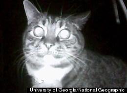 University of Georgia/National Geographic