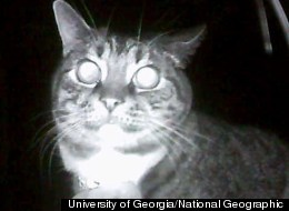 Researchers used small, lightweight cameras strapped to the collars of house cats to record more than 2,000 hours of footage of what cats do at night in the Athens, Georgia area.