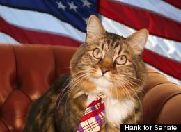 Hank, the feline Senate candidate, in a campaign photo