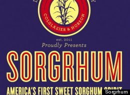 Sorgrhum