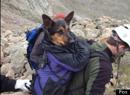 Missy was left on a mountain after she was injured. But she got rescued!