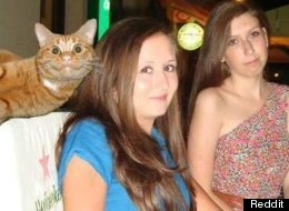 Cats Make The Best Photobombers
