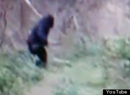 Could this be Bigfoot?