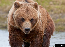 Richard White was mauled to death by a bear in Denali National Park, Alaska.