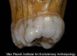 Scientists have just completed sequencing the entire genome of a species of archaic humans called Denisovans. The fossils, which consist of a finger bone and two molars, from this extinct lineage were discovered in Denisova Cave in southern Siberia.