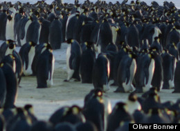 Man, that's a lot of penguins. British engineer Oliver Bonner snapped this photo in Antarctica last week.