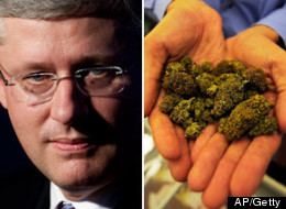 Police in southeastern New Brunswick have dismantled an outdoor marijuana grow operation — thanks in part to this week's visit to the area by Prime Minister Stephen Harper. (CP)
