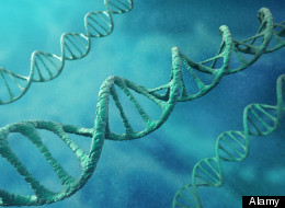 Prostate-specific gene could treat cancer