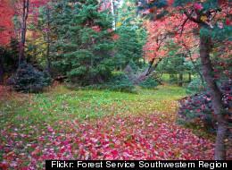 Flickr: Forest Service Southwestern Region