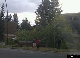 Sunday's wind storm in Calgary toppled trees and crushed cars. (Twitter: @john10452)