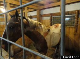 Police in Pennsylvania are still trying to determine who doused this horse with a flammable substance and set it on fire.