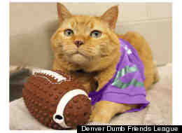 Tricky the cat is available for adoption at the Denver Dumb Friends League.