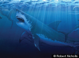 Paleoartist Robert Nicholls created this illustration of Megalodon in its natural habitat.
