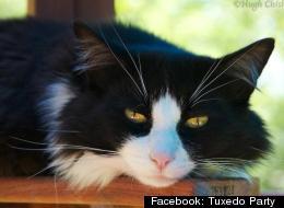 Facebook: Tuxedo Party