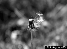 Flickr/tsgoons25