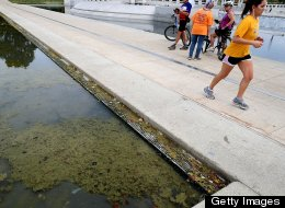 Just weeks after it reopened, the Lincoln Memorial's Reflecting Pool has attracted algae growth.