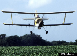 GMO crops need more and more pesticides to fend off weeds and insects, according to a new study.