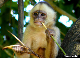 Marina Chapman, British housewife, says she was raised by capuchin monkeys in Colombia. Chapman shares her story in the new book