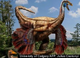 Artist's reconstruction of a feathered ornithomimid dinosaur found in Alberta, Canada.