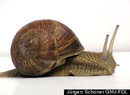 Jürgen Schoner GNU-FDL