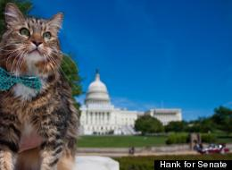 Hank's campaign manager Matthew O'Leary says that the cat may retire from politics.