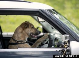 Auckland SPCA