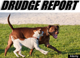 A fake Canadian news story on a bilingual dog law in Quebec has fooled the Drudge Report, Digg and New York Magazine. (Alamy)