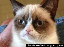 Facebook/Tard the grumpy cat