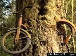 Helen Puz lost this bike more than 50 years ago only to discover it recently swallowed up by a tree.