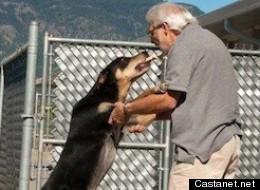 Diesel has been kept in a pound -- costing the Central Okanagan Regional District estimated $100,000 -- since it was seized two years ago for biting another dog. (Facebook via Castanet)