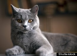 A study says that cats are responsible for billions of dead birds and mammals each year. (Shutterstock)