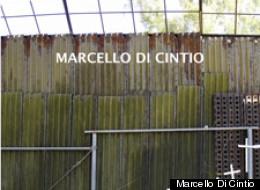 Marcello Di Cintio
